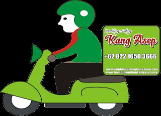 Delivery Catering Kambing Guling di Majalaya Bandung