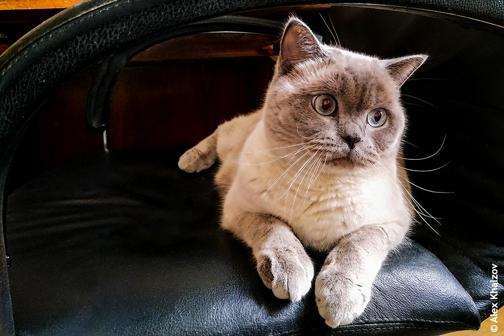 Juve_Cat