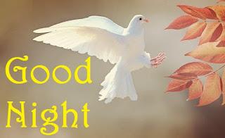 good night with birds