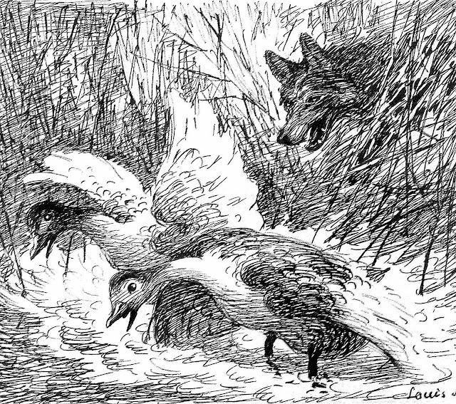 a Louis Moe illustration of a fox surprising ducks in marsh wetlands