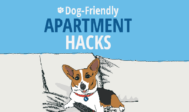How to Create Dog Friendly Apartment?