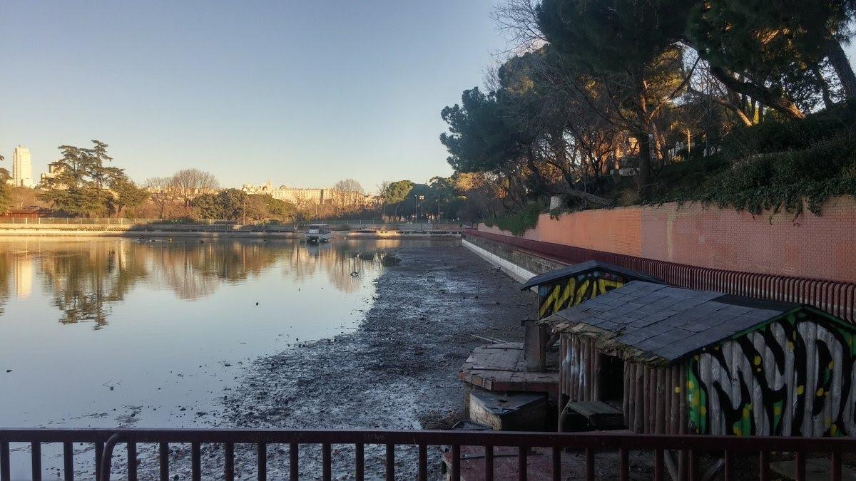 Genocidio de peces por las obras en el Lago de la Casa de Campo ...
