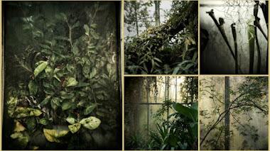 The Glasshouse. Explorando los invernaderos del Botánico de Edimburgo