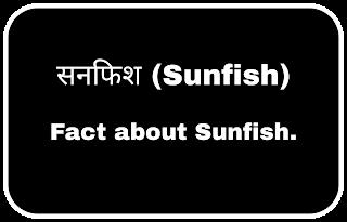 Sunfish - सनफिश। Fact about sunfish.