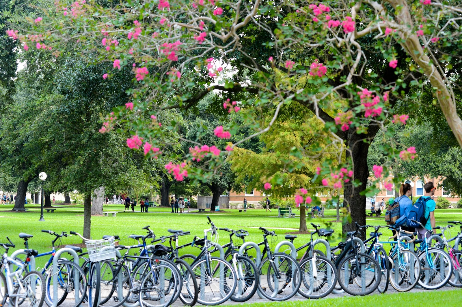 tulane university admission requirements