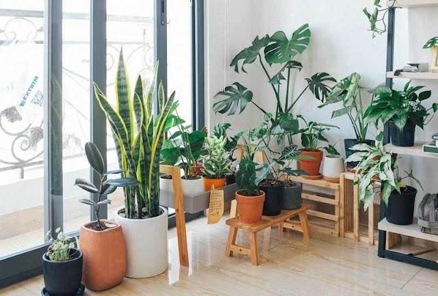 Indoor gardening plants that are popular and unique | Elegant Indoor Plants 2020