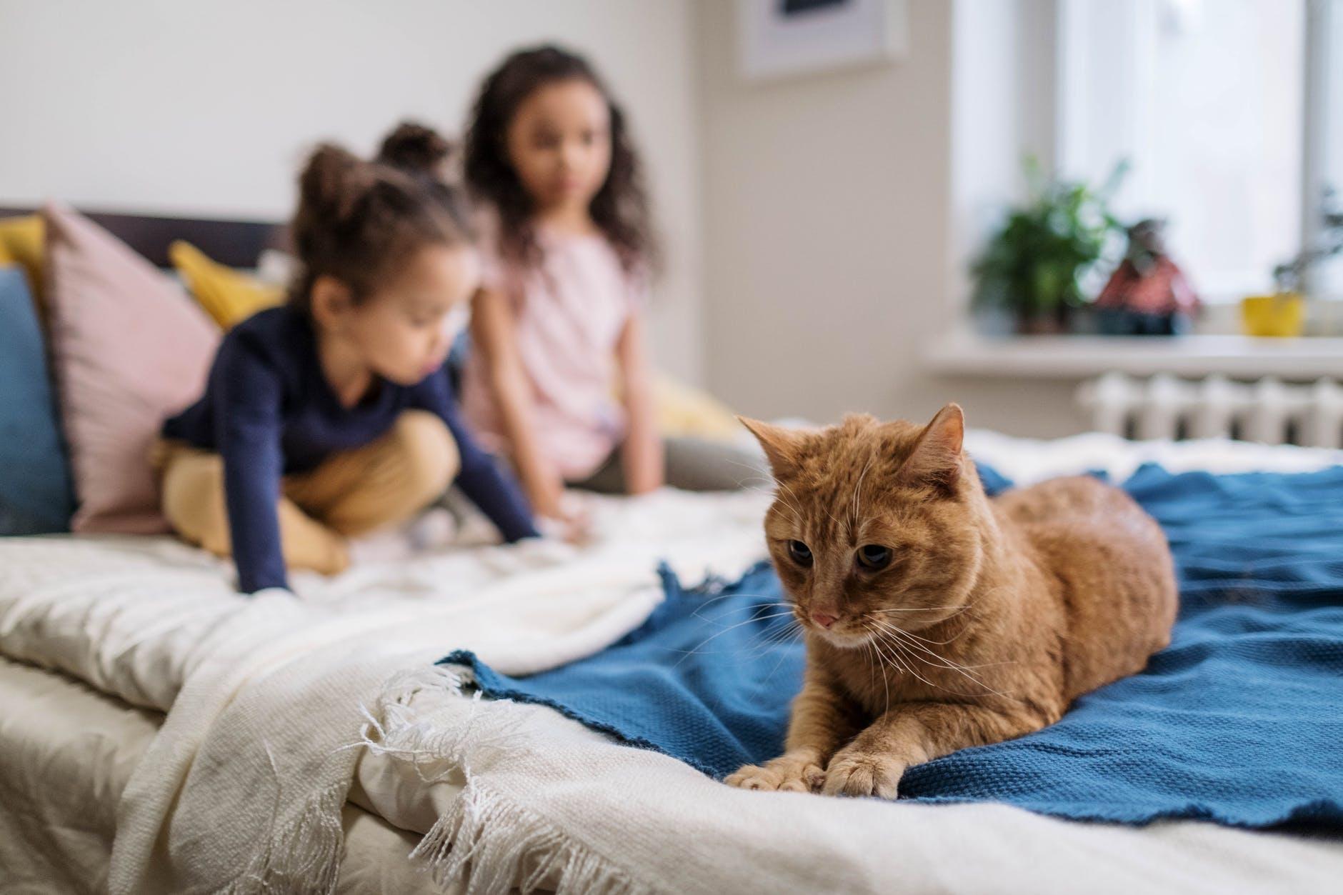 5 étapes pour présenter le nouveau chaton aux enfants