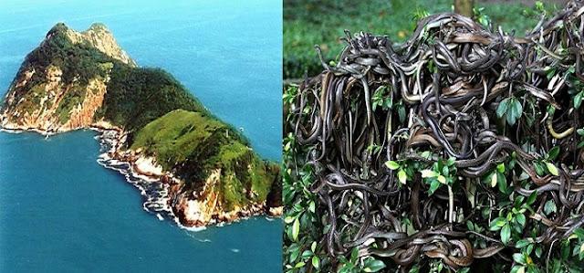 Yasak Bölge : Queimada Grande (Yılan) Adası