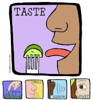 Five Senses Clip Art at EducatorClips.com