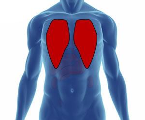 Akciğer vücudun neresindedir? görevleri nelerdir?