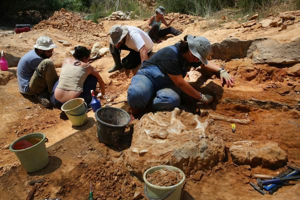Prehistoric rhinos, horses unearthed at Greek palaeontology site