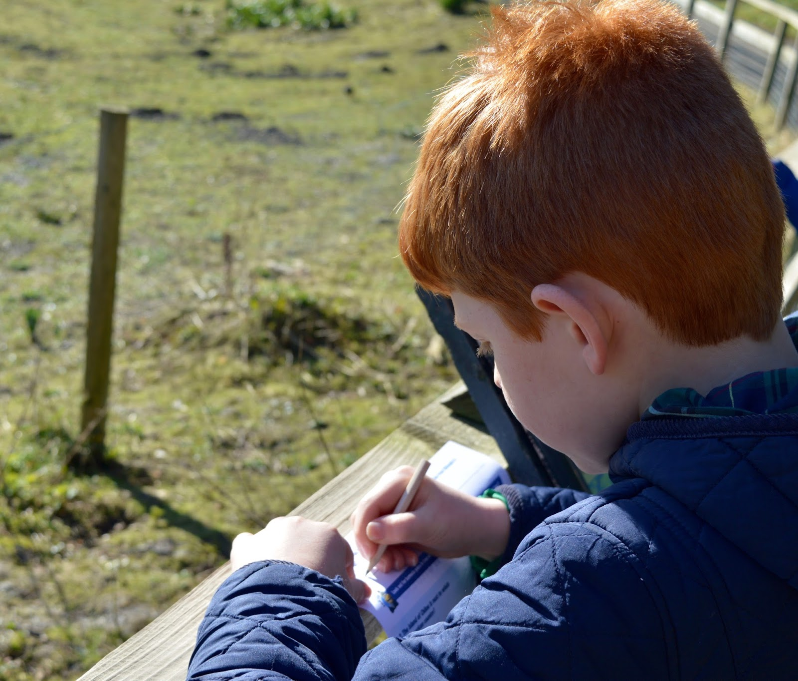 WWT Washington Wetland Centre | An Accessible North East Day Out for the Whole Family - free trail