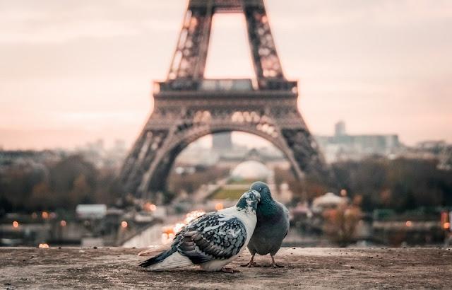 Những điều kỳ thú về nước Pháp