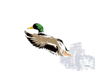 Animal Animals Duck Ducks Print Prints
