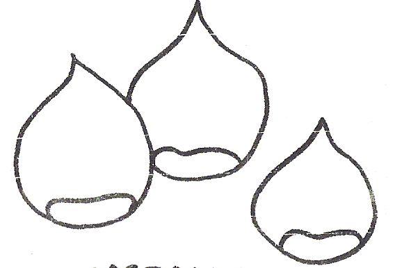 Dibujos De Castanas Para Colorear E Imprimir: RECURSOS Y ACTIVIDADES PARA