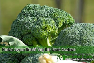 Manfaat Sayuran Brokoli Yang Baik Untuk Kesehatan
