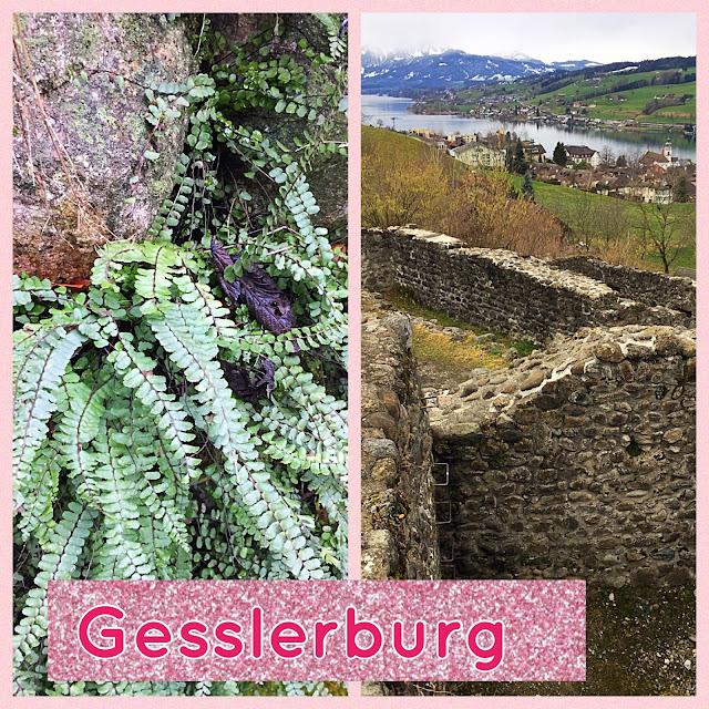 Gewächs an Mauer und Ruine Gesslerburg