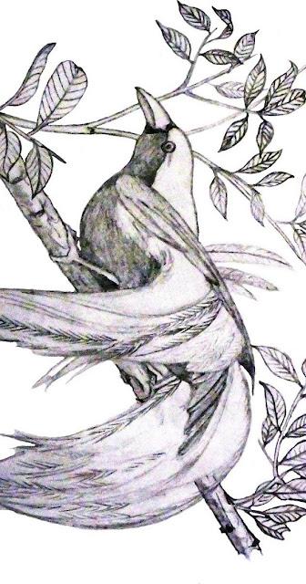 Gambar burung cendrawasih sketsa di pohon
