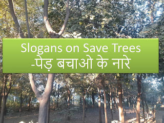 slogans on save trees in hindi 2021