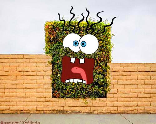 Spongebush