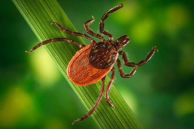 A New Tick-borne Virus Kills Seven people and Infected 60 others in China