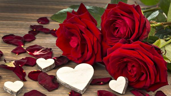 wallpaper hd mawar merah