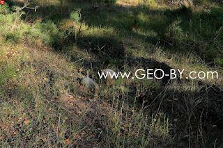 Hewn foundation stones of the house of the settlement Bliznieta (Gemini)