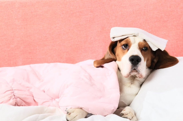 Dog Ringworm Treatment Home Remedy