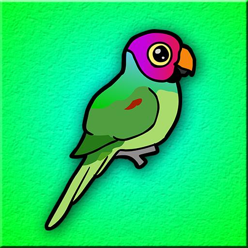Plum Headed Parakeet Esca…