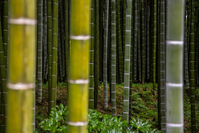 Bamboo :: Canon EOS5D MkIII   ISO400   Canon 24-105@95mm   f/4.0   1/20s