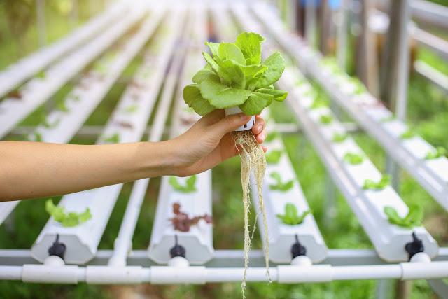 Hidroponik (Topraksız) Tarımın Avantajları