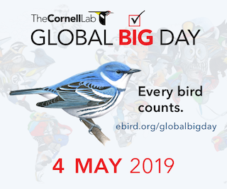 Global Big Day