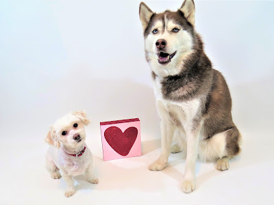 Heart disease in dogs, Pet heart health, Heart healthy, Dog health