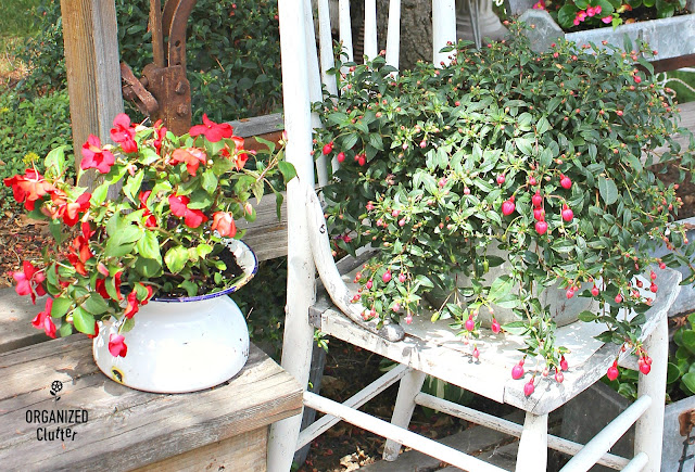 Free Garden Junk Up-cycling Projects #enamelware #spittoon #gardenjunk #vintage #farmhouse #stencil #oldsignstencils #impatiens #containergarden #farmhousestyle