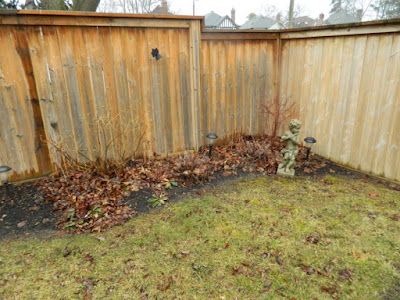 Leaside Spring Cleanup Before by Paul Jung Gardening Services--a Toronto Organic Gardening Company