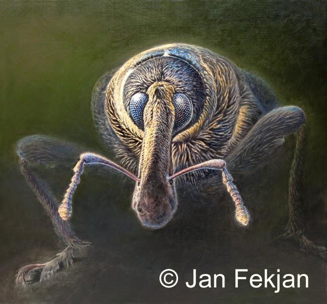 Bilde av digigrafiet  'Portrett av en skogsarbeider 2'. Digitalt trykk laget på bakgrunn av et maleri av et insekt. Illustrasjon av gransnutebille, Hylobius abietis. Hovedmotivet er en nærstudie av et insekt. Bildet er nærmest kvadratisk.
