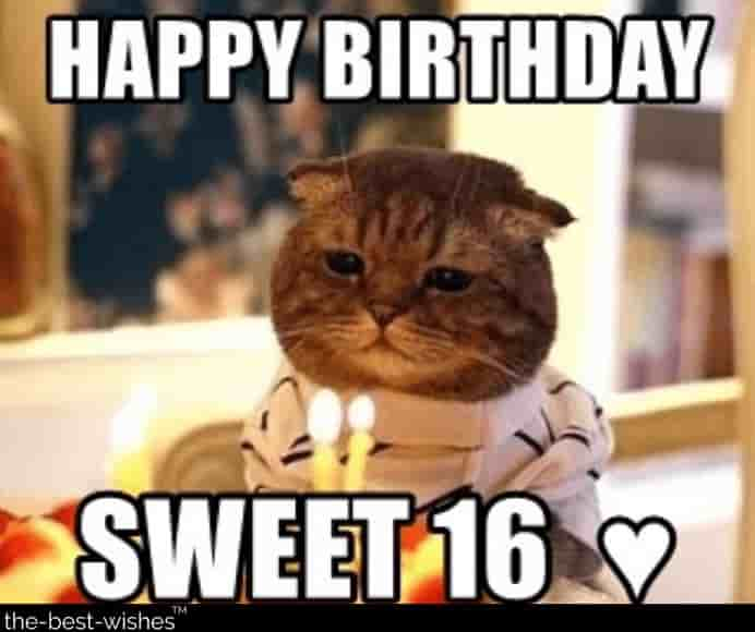 sweet cat funny memes wishes for birthday