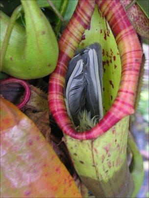 Het andere Brazilië: Vleesetende planten