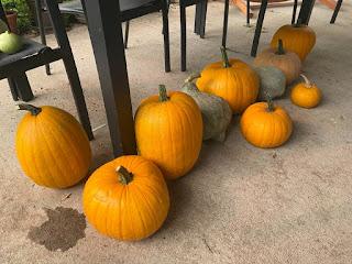 Pumpkins and Blue Hubbards