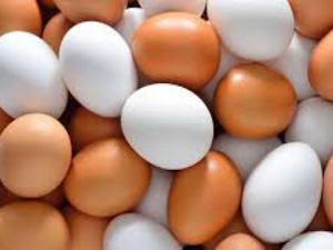 Yumurta kabuklarının renkleri neden farklıdır?