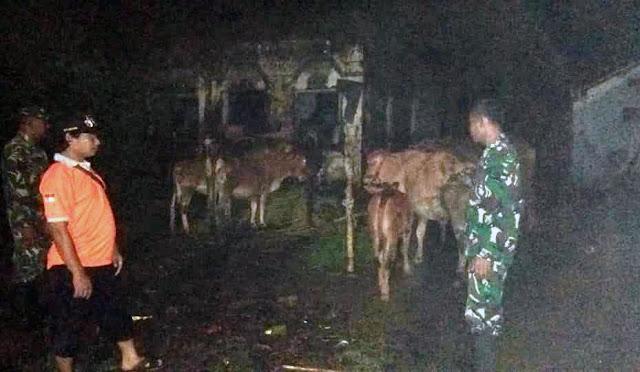 Hewan ternak milik warga diungsikan
