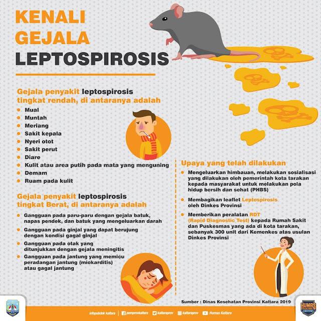 Gejala Leptospirosis