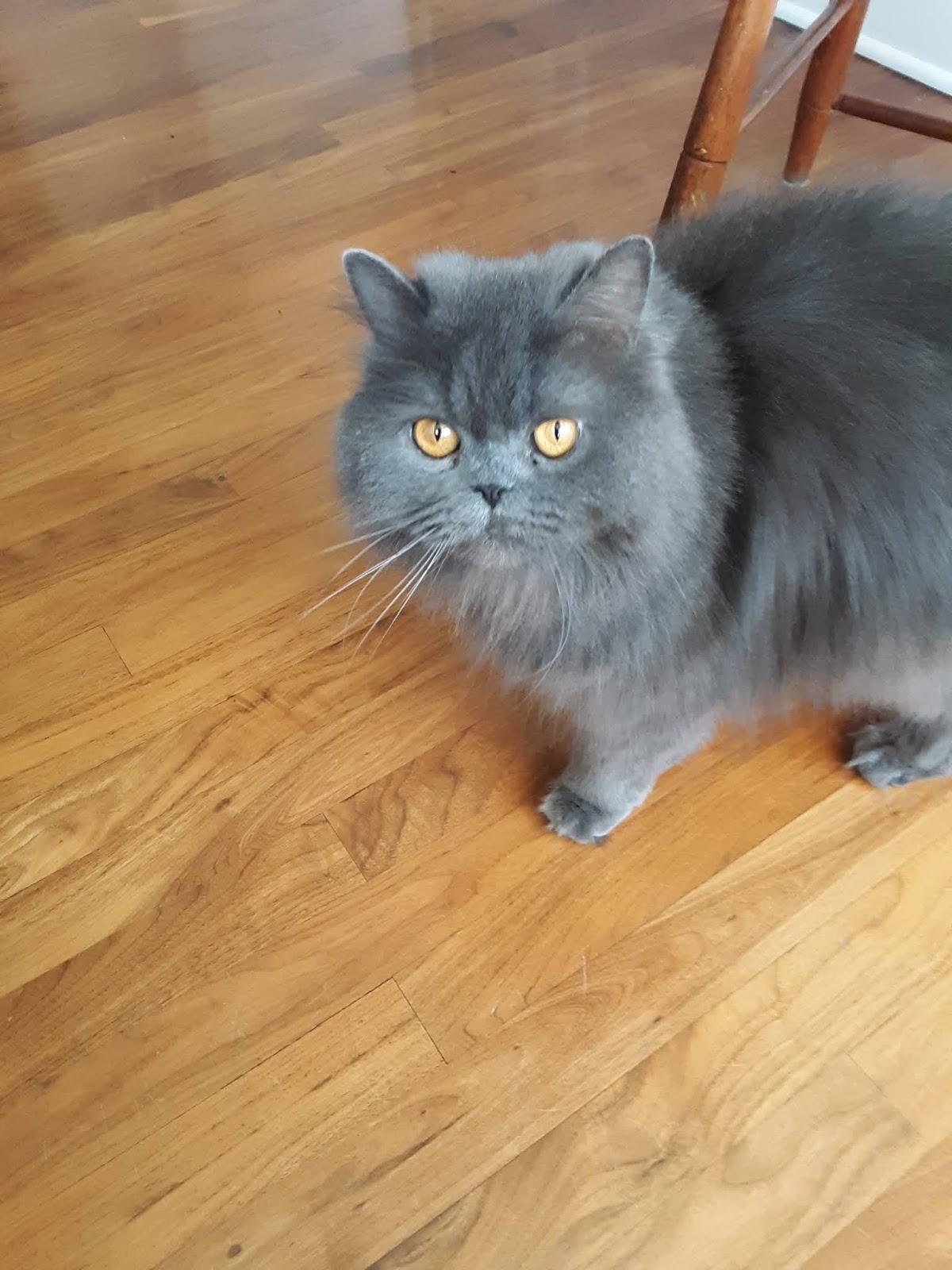 Melissa's Mochas, Mysteries and Meows: Cat Sitting #SundaySelfie