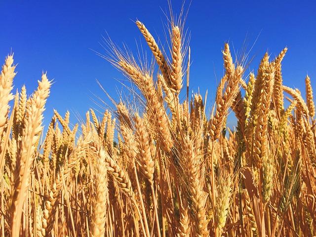 Cultivos Alimentarios