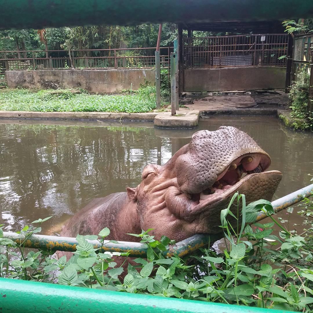 Kebun Binatang Bandung, Pilihan Wisata Edukasi Bersama