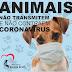 Animais de estimação não transmitem coronavírus para humanos