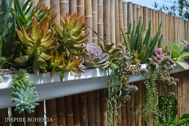 Cactus and Succulent Rain Gutter Fence Planters by Inspire Bohemia - Miami/Ft. Lauderdale - suspended hanging planters - small space gardening