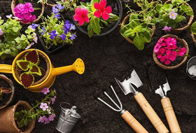 Looking down on plants and flowers in pots, a yellow watering can and gardening tools in black dirt