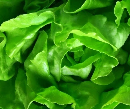 Lettuce Leaves Benefits