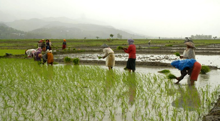 Kerala Paddy Field Wetland Protection Rules; Form 5, 6, 7, 8, 9, 10